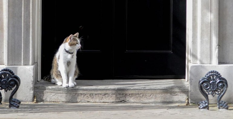 Larry, il gatto di David Cameron davanti all'ingresso di Downing StreetLarry the No10 cat outside No10 Downing St on the day of the 2015 Cabinet Reshuffle. London, United Kingdom. Picture by Andrew Parsons  i-ImagesLaPresse  -- Only Italy